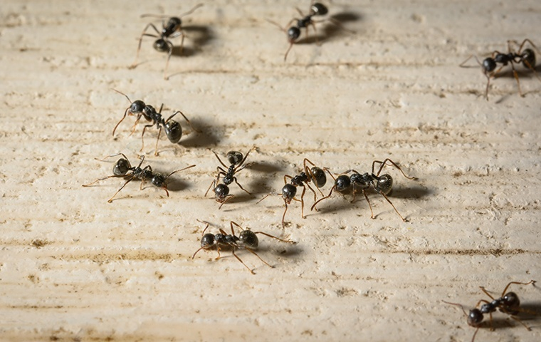 several ants on a basement floor in a home in elizabeth city north carolina