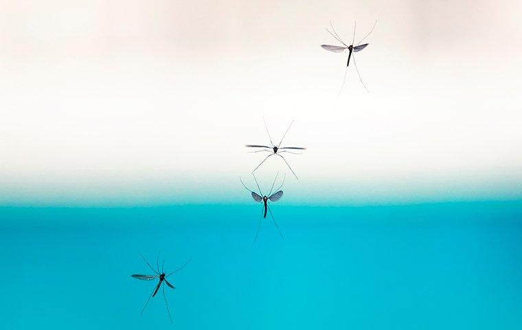 mosquitoes flying in a backyard near a pool