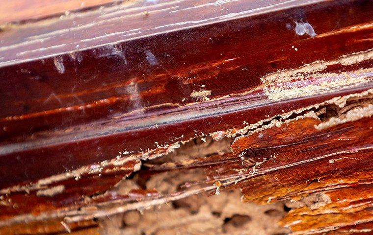 signs of termite damage on a wooden windowsill
