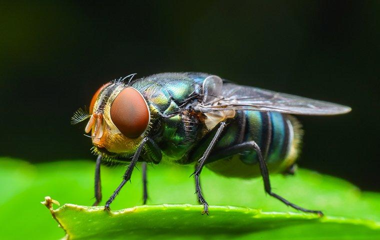 blow fly on plant