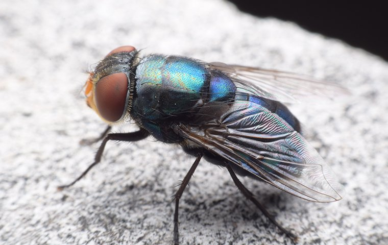 blow fly on white stone