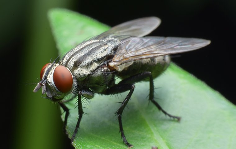 cluster fly on leaves
