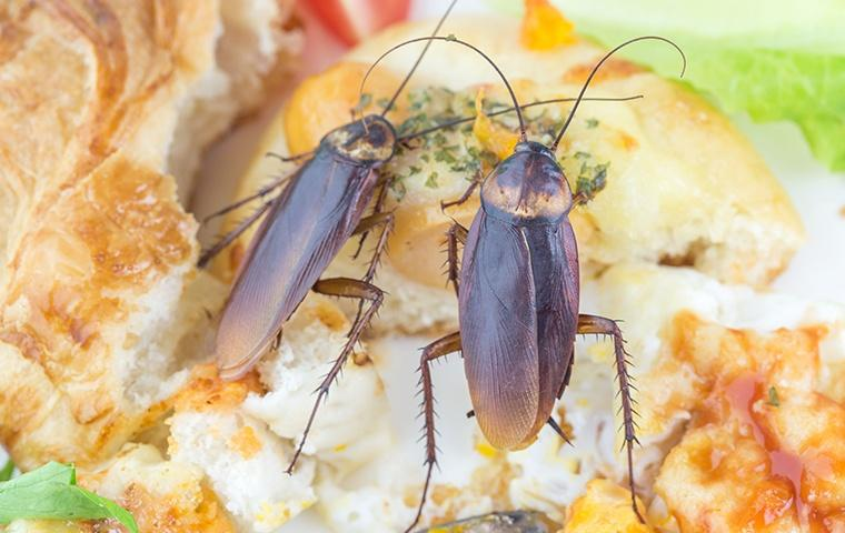 two cockroaches crawling on top of a biscuit in a home in elizabeth city north carolina