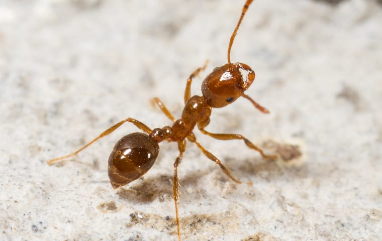 fire ant outside elizabeth city home