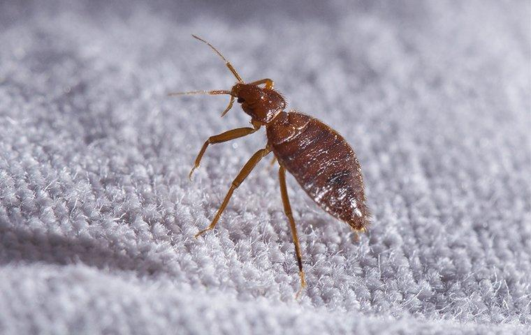 a bed bug on mattress in a home in elizabeth city north carolina