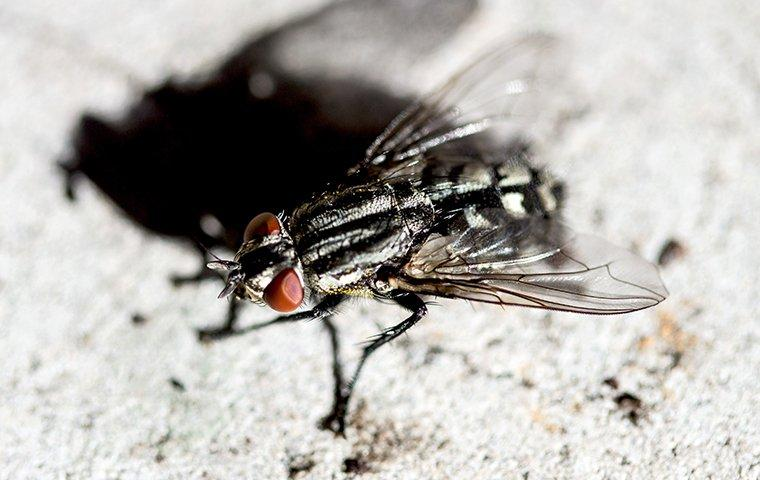 house fly on on the ground