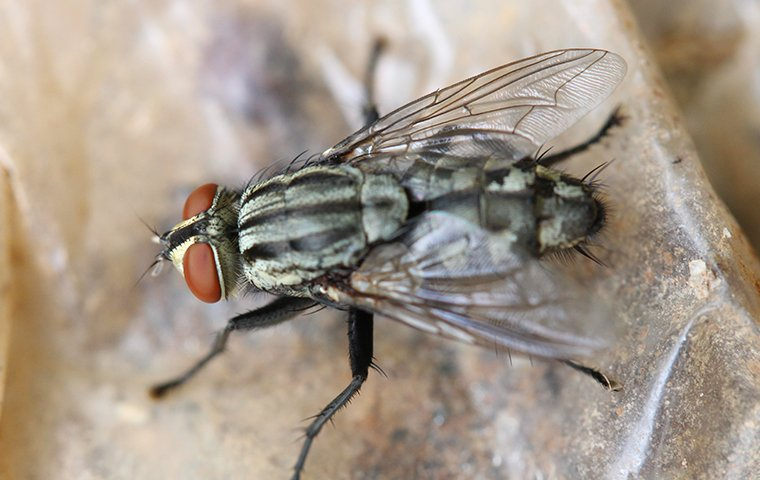 house fly on a rock