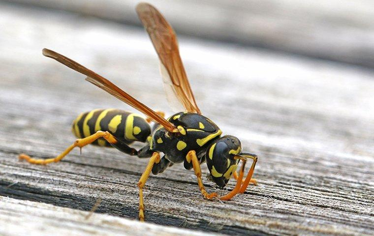 paper wasp on deck
