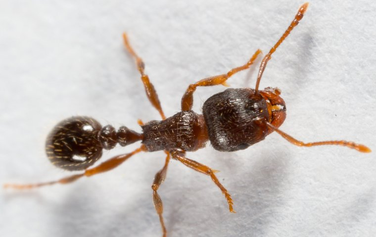 pavement ant on wall