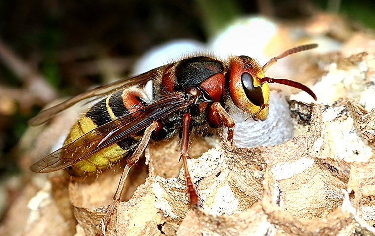 a wasp crawling on its nest outside of a home in elizabeth city north carolina
