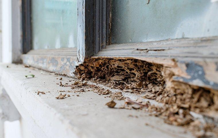 termite damage to a north carolina home