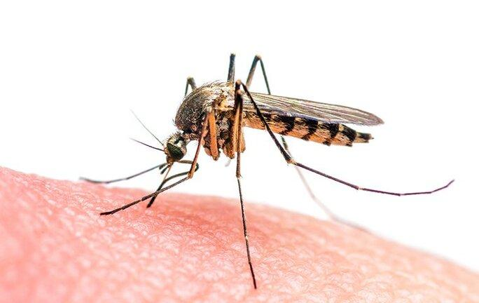 mosquito biting skin of hand