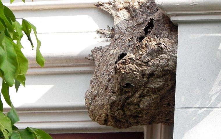 a wasp nest on a house
