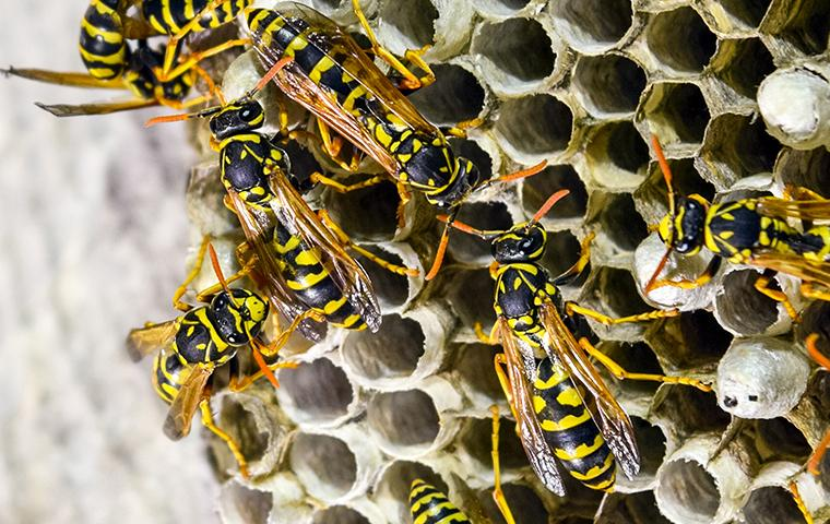 wasps on nest outside of a house
