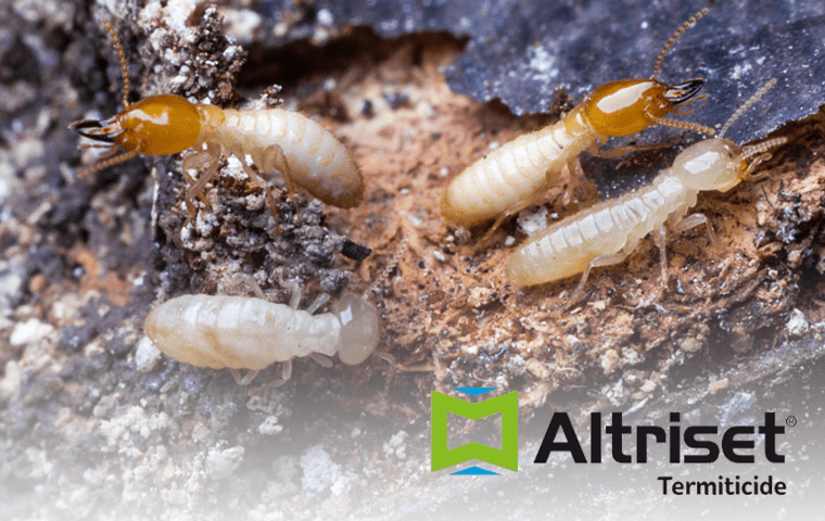 termites in a florida yard
