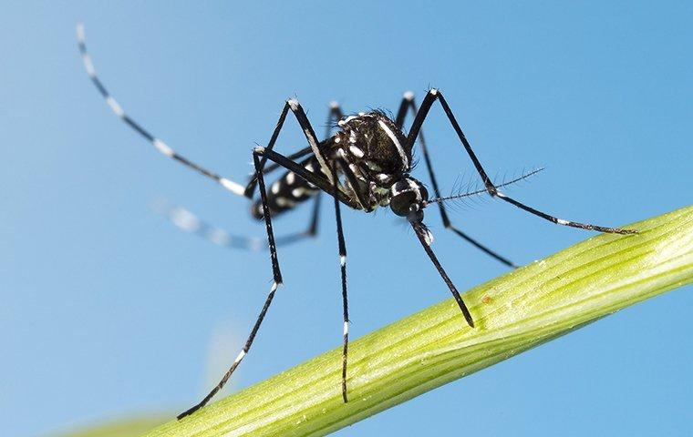 a mosquito on the stem of a plant