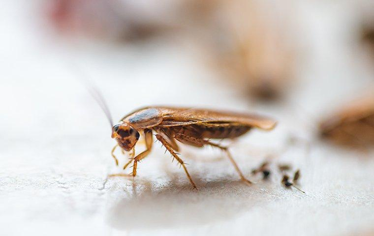 a cockroach on a white surface