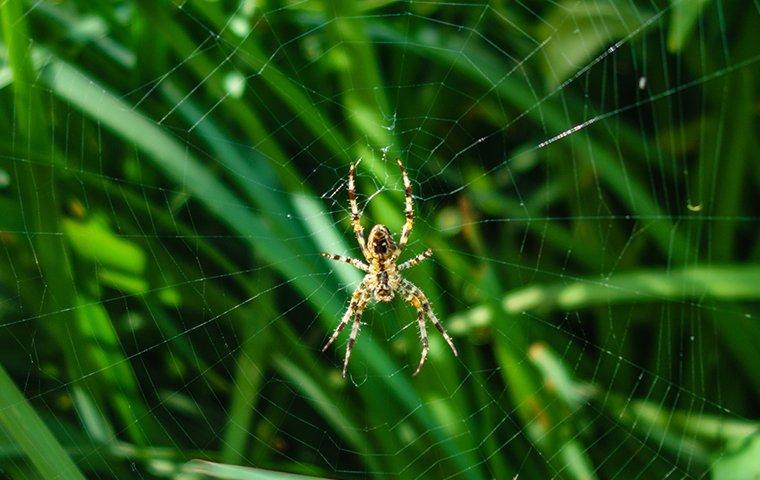 a garden spider on a web