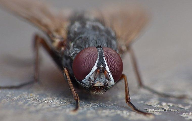 a house fly in a jacksonville kitchen