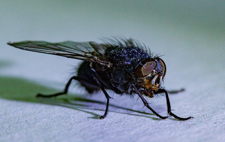 a house fly on white countertop