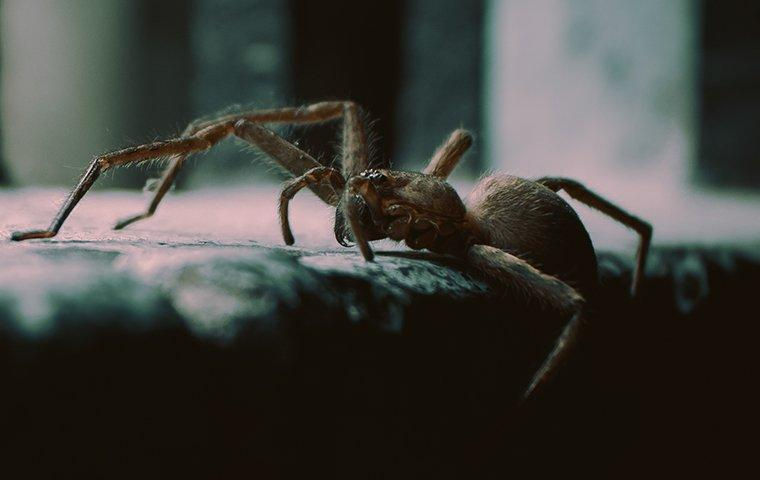 spider crawling up a step
