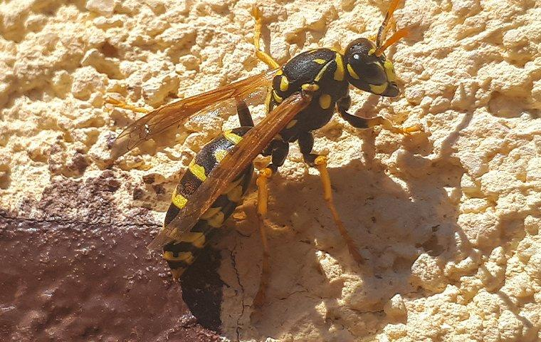 a paper wasp crawling on an exterior wall