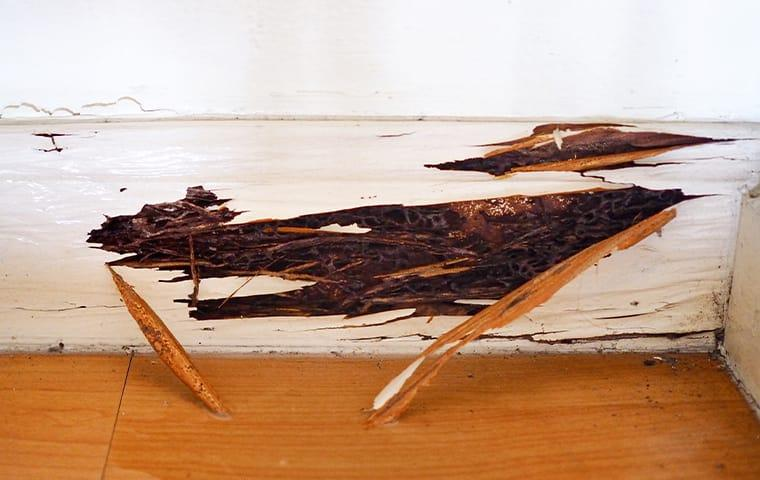 clear signs of costly termite damage through the woodwork of a jacksonville florida home