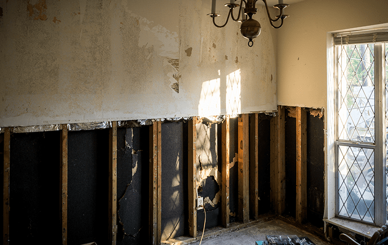 interior of a mold damaged home in palm valley florida