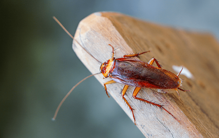 a cockroach inside of a home in neptune beach florida