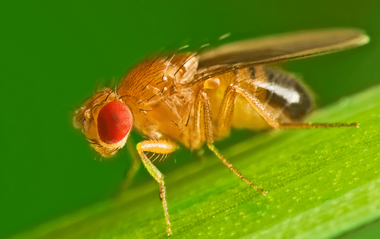 a fruit fly on a blade of grass outside a home in jacksonville florida