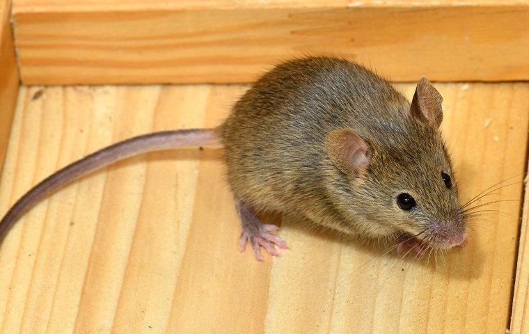 mouse inside drawer