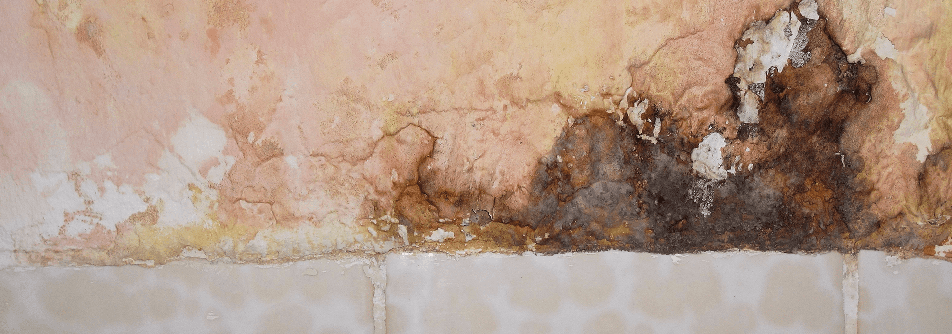 mold on the outside of a st.augustine home