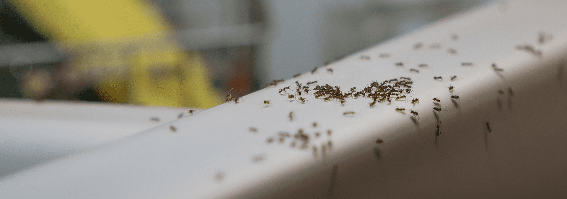 ants on the counter of a jacksonville florida home