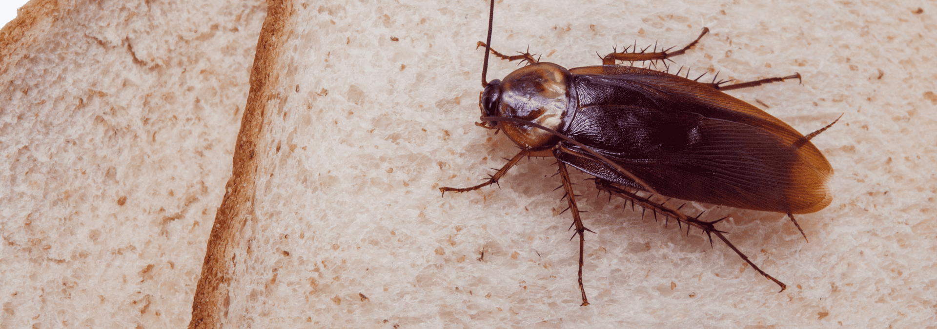 a cockroach outside of a home in fruit cove florida