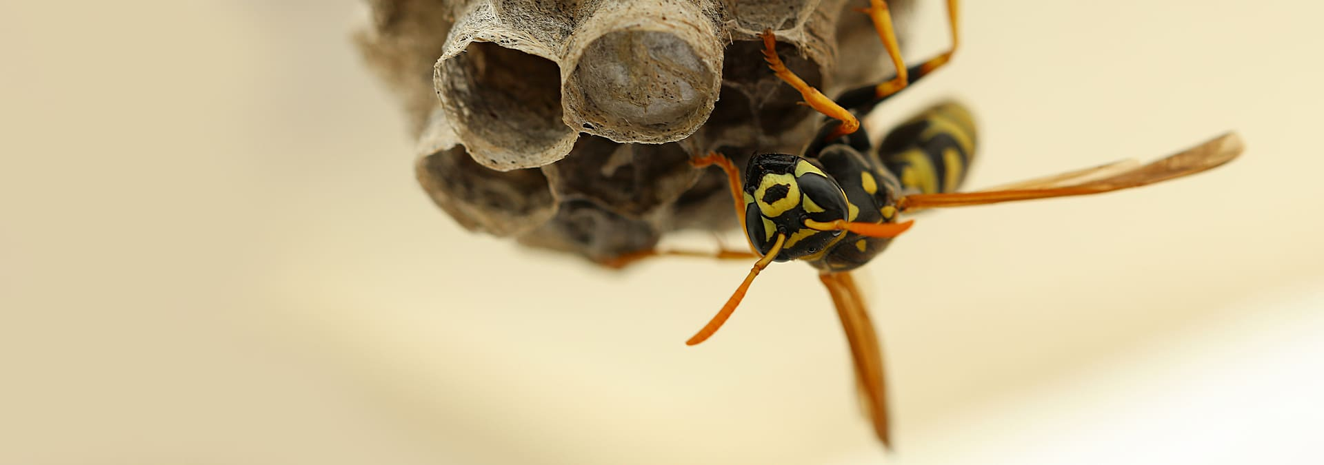 a wasp building a nest outside of a jacksonville florida home