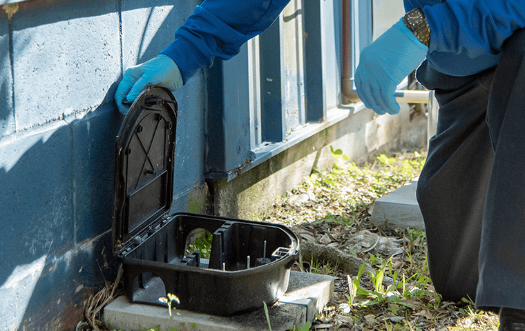 a technician performing rodent control in jacksonville florida