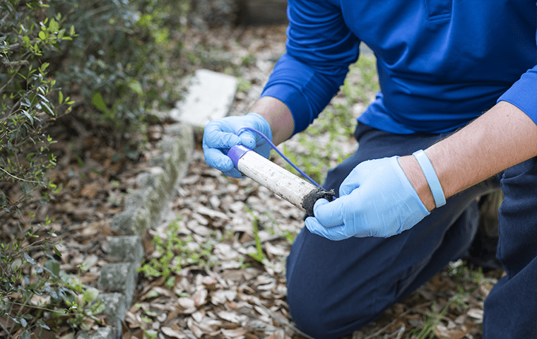 a technician inspecting a termite baiting station outside of a home in jacksonville beach, florida