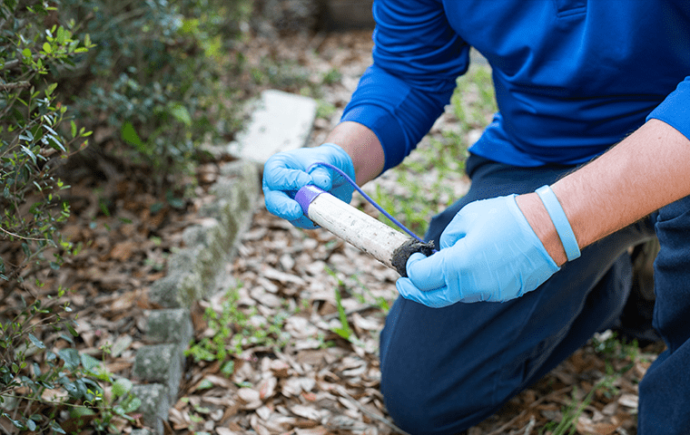 a technician inspecting a termite baiting system outside of a an atlantic beach florida home