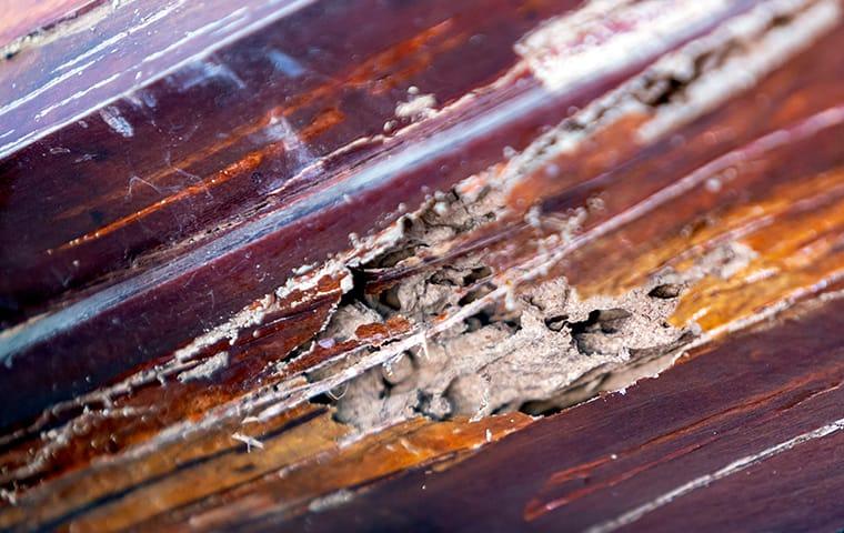 termite damage in jacksonville home