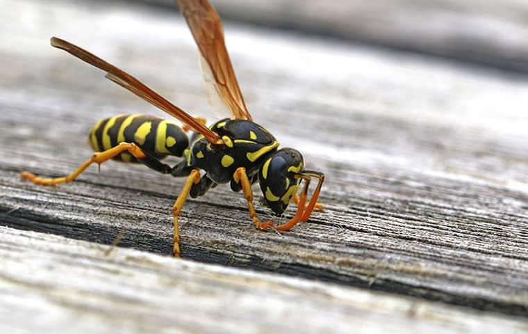 a wasp outside of a home in saint augustine florida