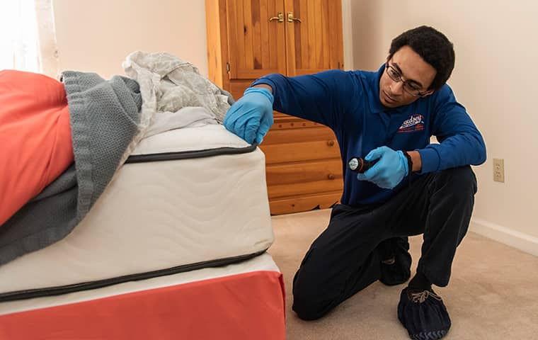 a pest technician inspecting for bed bugs in a yulee florida home