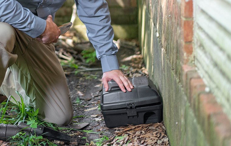 tech checking a rodent station outside home