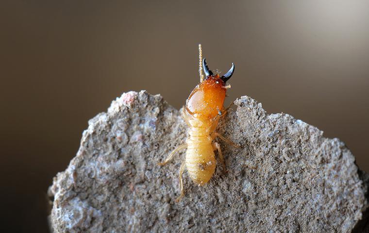 close up of termite