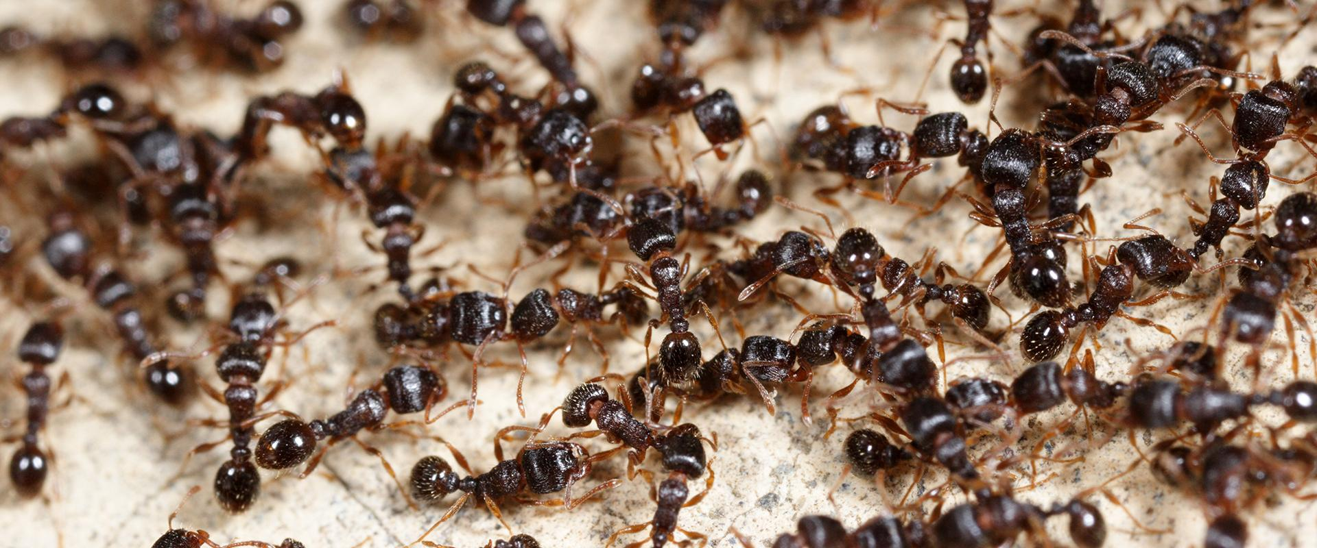 close up of ants