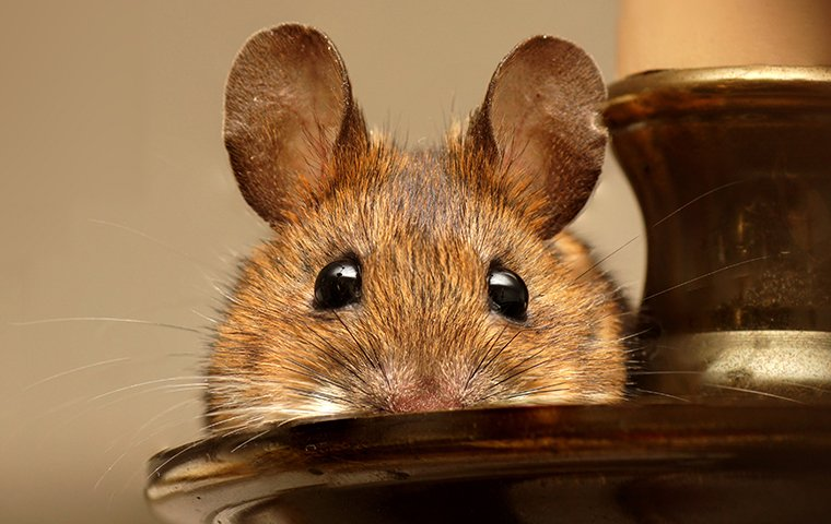mouse peeking over a candle