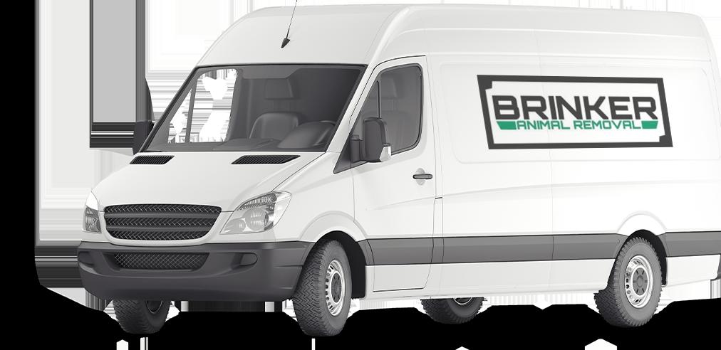 brinker animal removal van