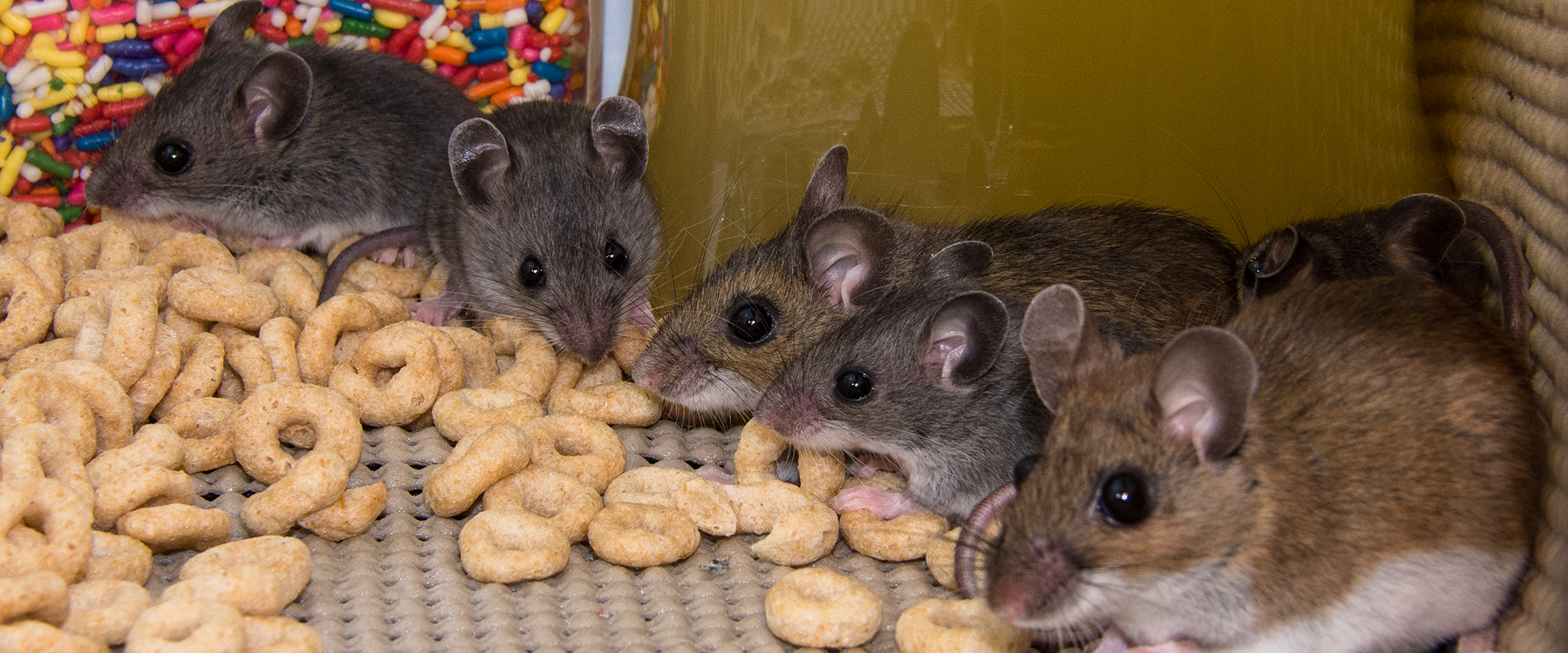 rodents in a pantry in plano texas