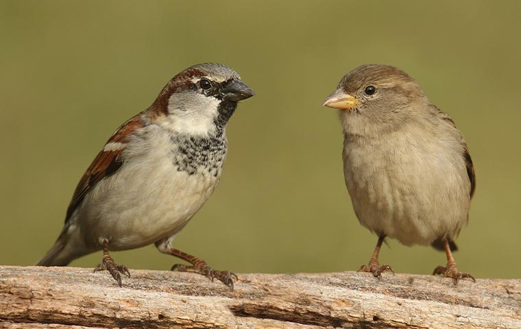 birds on a branch in plano texas