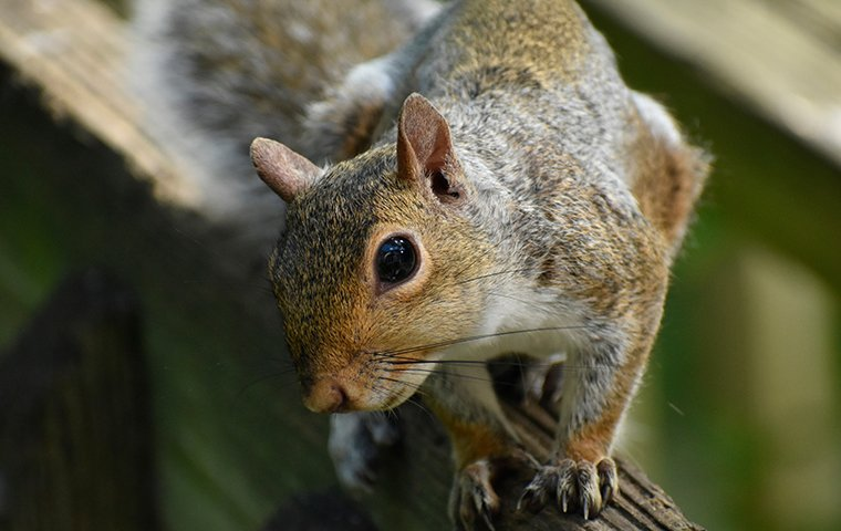 squirrel on a branch in plano texas