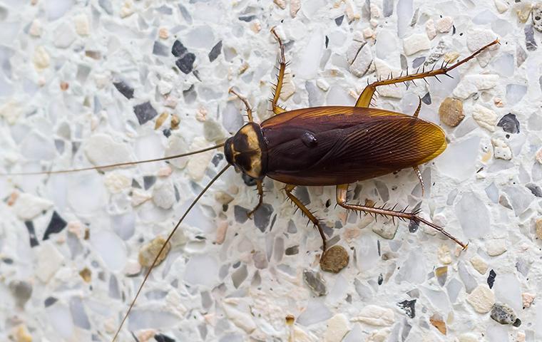 a cockroach on a bathroom wall